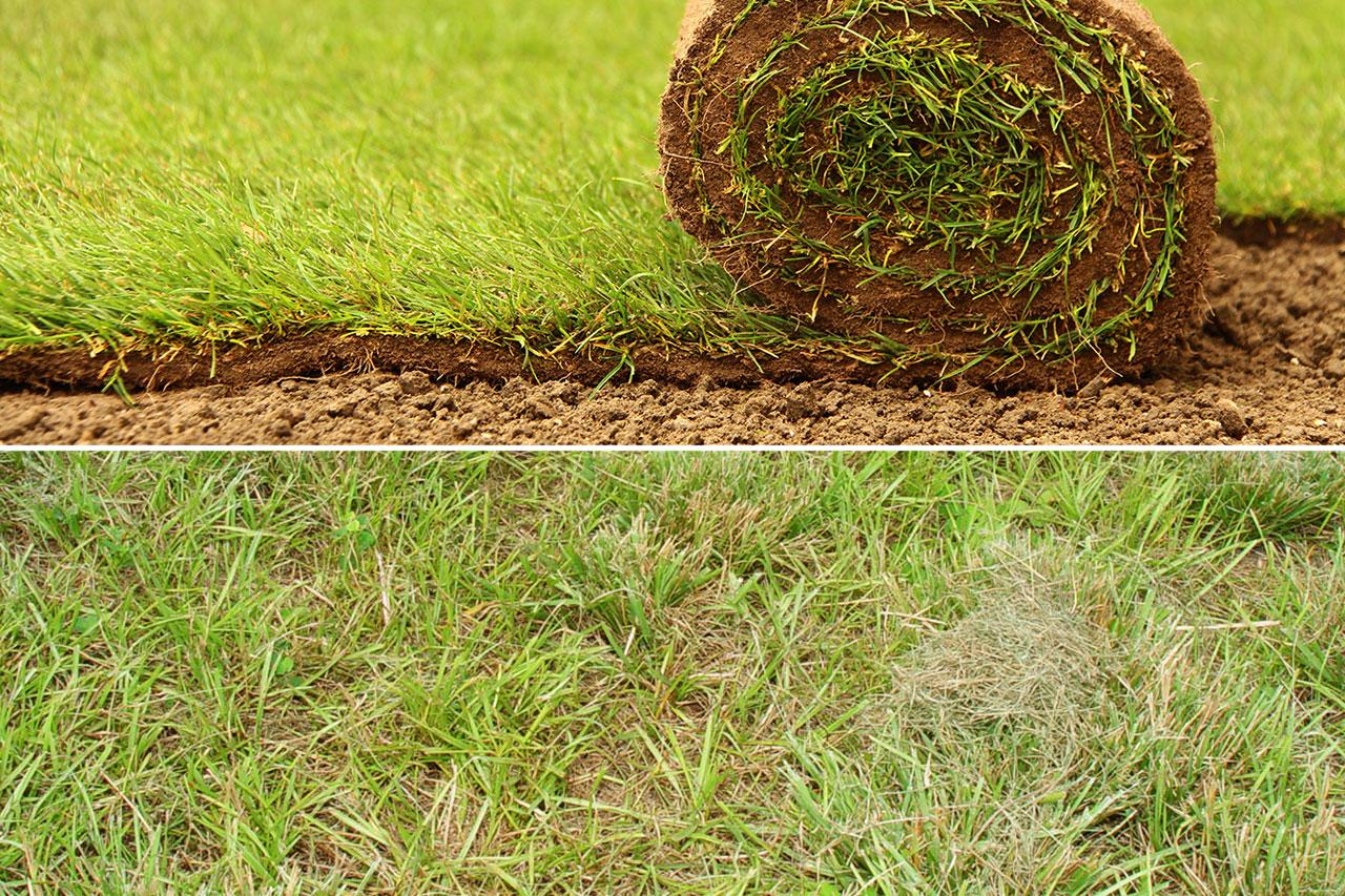 La soluzione alle erbacce e 39 il prato a rotoli green for Prato erboso a rotoli