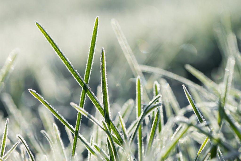 erba prato congelata