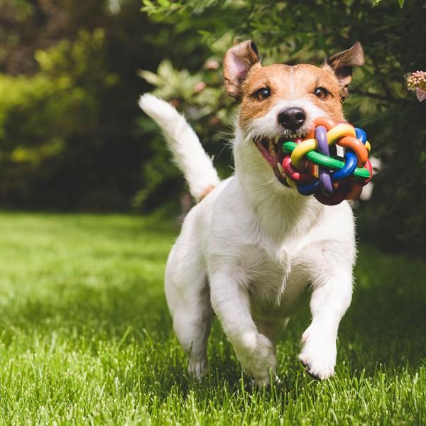 cane che corre su prato a rotoli